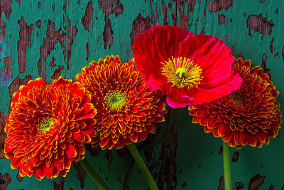 Chipping Paint Photograph - Poppy And Mums by Garry Gay