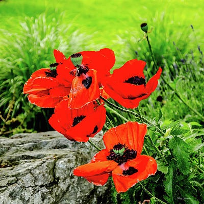 Photograph - Poppy Art Blooming by Roxy Hurtubise
