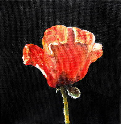 Painting - Poppy by Betty-Anne McDonald