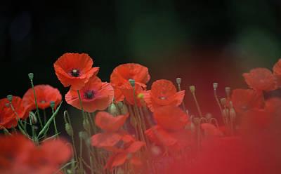 Photograph - Poppy Black by Peter Walkden