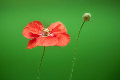 Photograph - Poppy by Bulik Elena