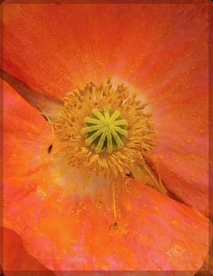 Photograph - Poppy Closeup by Jean Noren