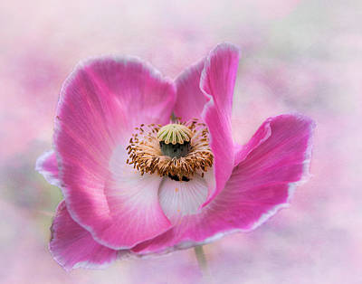 Photograph - Poppy by David and Carol Kelly