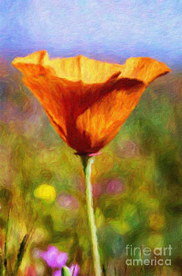 Photograph - Poppy Delight by Pam Vick