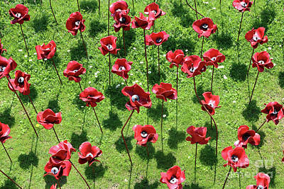 Photograph - Poppy Display by Julia Gavin