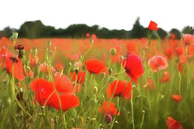 Photograph - Poppy Dream by Leah Palmer