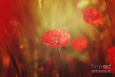 Hjbh Photograph - Poppy Dreams.... by LHJB Photography