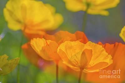 Abstract Flowers Photos - Poppy Dreams by Veikko Suikkanen