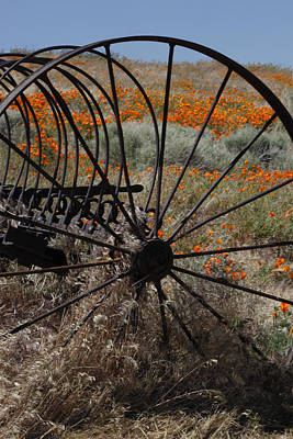 Art Print featuring the photograph Poppy Farm by Ivete Basso Photography