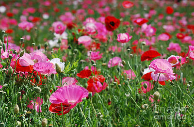 Photograph - Poppy Field 20130528_275 by Tina Hopkins