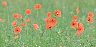 Photograph - Poppy Field by Alan Lenk