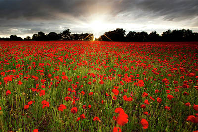 Large Group Of Objects Photograph - Poppy Field At Sunset by Doug Chinnery