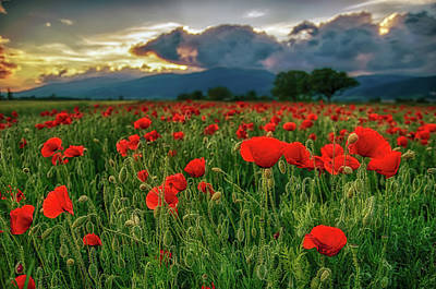 Photograph - Poppy Field At Sunset by Plamen Petkov
