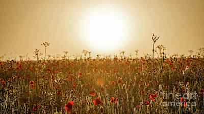Contre-jour Photograph - Poppy Field Contre Jour by Richard Thomas