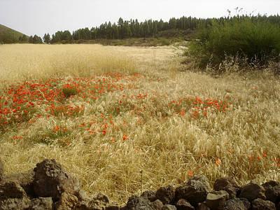 Photograph - Poppy Field - Floral Landscape 1 by Elena Schaelike