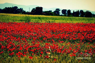 Poppy Field In Tuscany Art Print