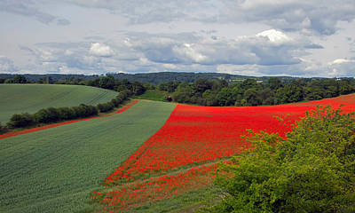 Photograph - Poppy Field by Keith Armstrong