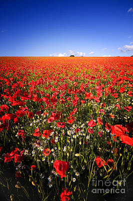 Photograph - Poppy Field by Meirion Matthias