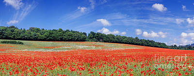 Photograph - Poppy Field Panoramic View by Warren Photographic