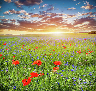Photograph - Poppy Field, Summer Countryside Landscape At Sunset. Romantic Sky. by Michal Bednarek