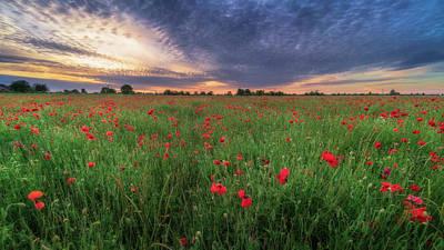 Photograph - Poppy Field Sunset by James Billings