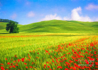 Poppy Field Original