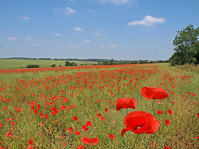 Photograph - Poppy Fields 1 by Gill Billington