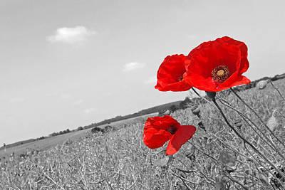 Photograph - Poppy Fields 2 Black And White by Gill Billington