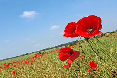 Red Poppy Photograph - Poppy Fields 2 by Gill Billington