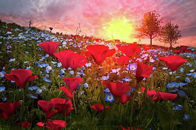 Photograph - Poppy Fields At Dawn by Debra and Dave Vanderlaan