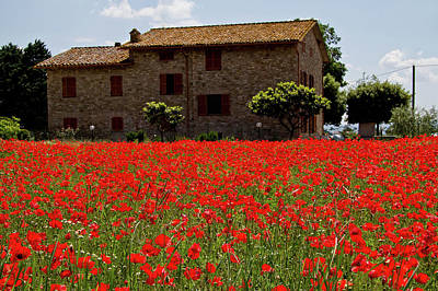 Photograph - Poppy Fields by Roger Mullenhour