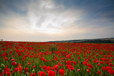 Photograph - Poppy Fields by Will Gudgeon