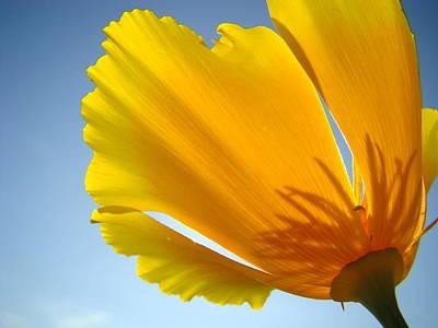 Poppy Flower Art Print Poppies 13 Botanical Floral Art Blue Sky Art Print by Baslee Troutman