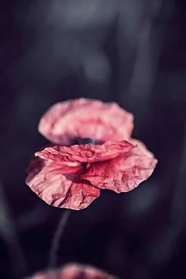 Garden Flowers Photograph - Poppy Flower At Midnight by Oksana Ariskina