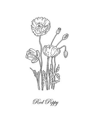 Florals Drawings - Poppy Flower Botanical Drawing Black And White by Irina Sztukowski
