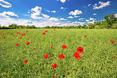 Photograph - Poppy Flower Field And Green Landscape by Brch Photography