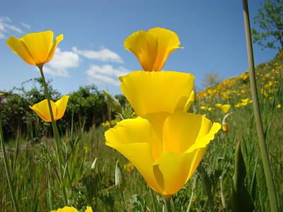 Poppy Flower Meadow 7 Poppies Blue Sky Artwork Baslee Troutman Art Print by Baslee Troutman