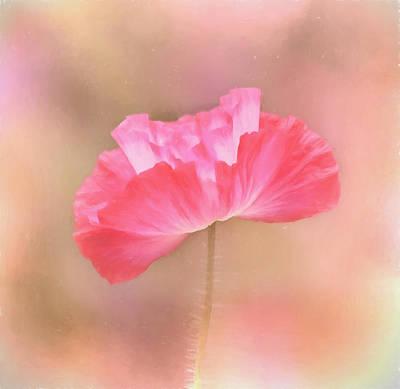 Photograph - Poppy Flower - Tickle Me Pink by Kim Hojnacki