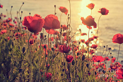 Photograph - Poppy Flowers At Sunset by Patricia Hofmeester