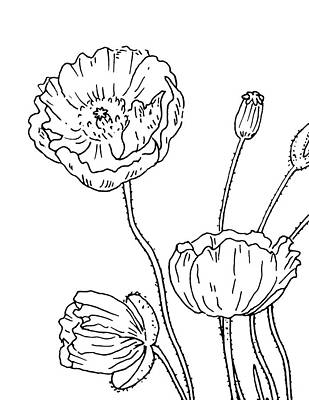 Drawing - Poppy Flowers Drawing  by Irina Sztukowski