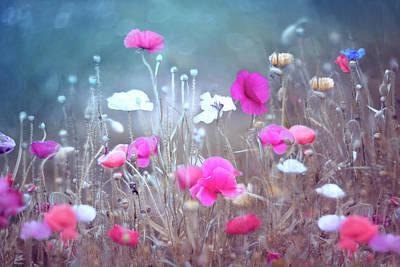 Garden Photograph - Poppy Garden by Magda Bognar