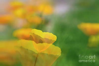 Abstract California Poppies Photograph - Poppy Garden by Veikko Suikkanen