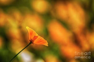 California Poppies Photograph - Poppy Glow by Veikko Suikkanen