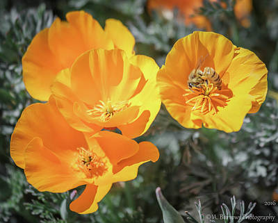 Photograph - Poppy Group by Aaron Burrows