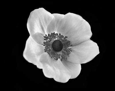 Photograph - Poppy In Black And White by Lilia D