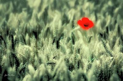 Cornfield Digital Art - Poppy In Cornfield by John Van Maris
