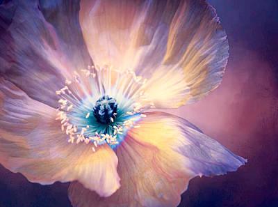 Pretty Pink Poppy Macro Digital Art - Poppy In Purples by Terry Davis