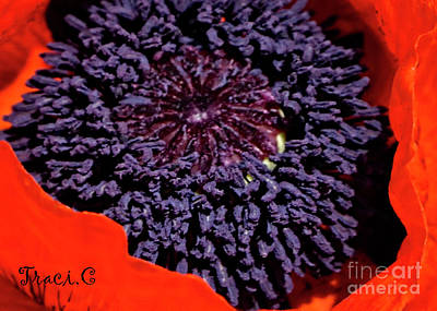 Photograph - Poppy Inside by Traci Cottingham