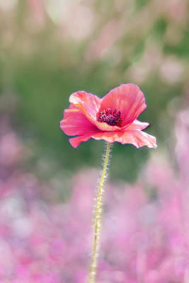 Little Girls Photograph - Poppy Love by Amy Tyler