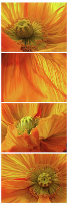 Susann Serfezi Wall Art - Photograph - Poppy Love by AugenWerk Susann Serfezi